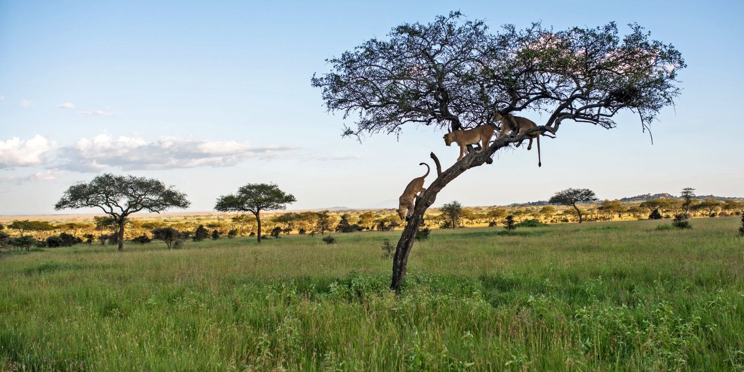 travelling between masai mara to Serengeti